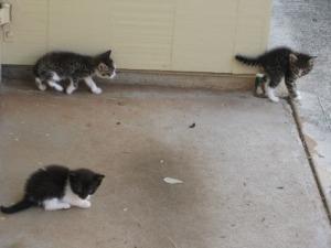 3-kittens-2-a