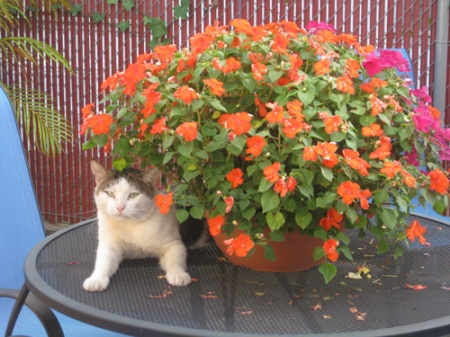 cutey and flowers-1-A