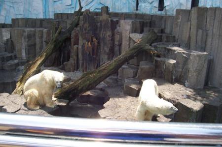 tokyo-zoo-polar bears-A