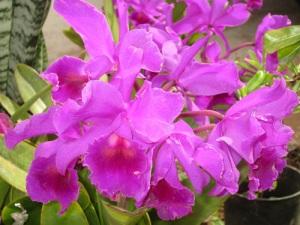 10-11-11-orchids-A
