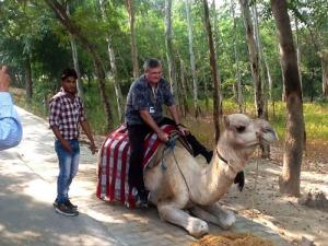 India-camel ride (al rho)-a