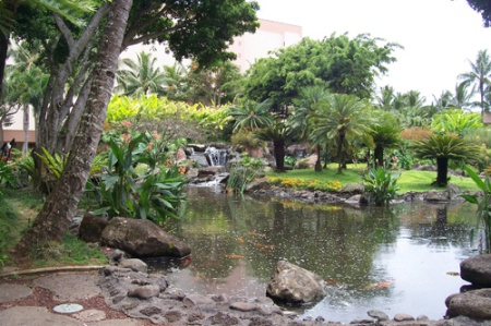 Kauai, 2008, Marriott, pond-A
