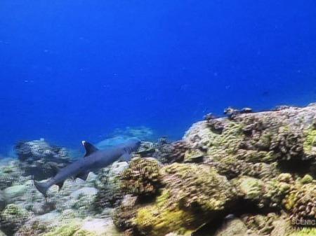 Fish 002-A