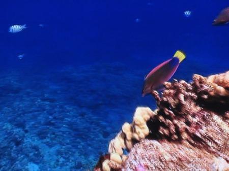 Fish 005-A