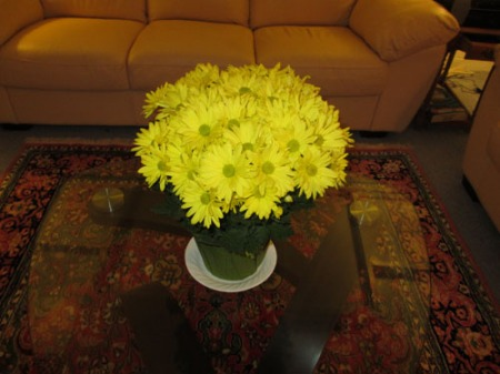 yellow mums 001-A
