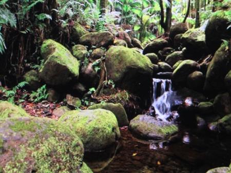 scenic Hawaii 011-A