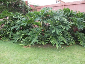 yard plants 002-A