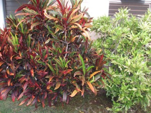 yard plants 007-A