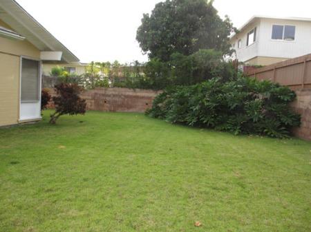 yard plants 010-A