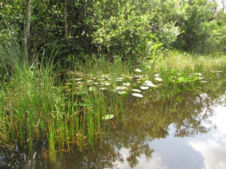 Everglades 080-A