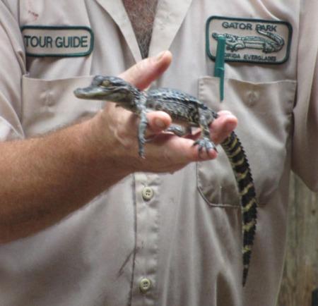 Everglades 104-A