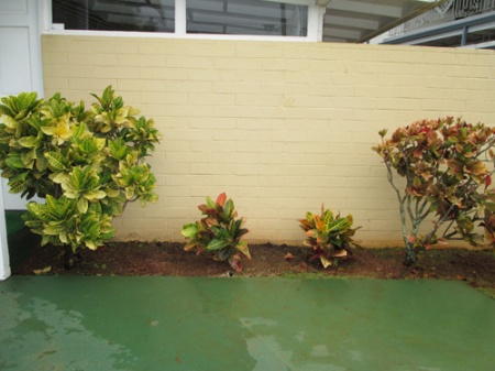 new crotons 003-A