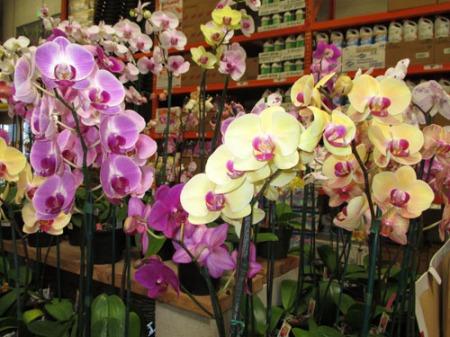plants Home Depot 001-A