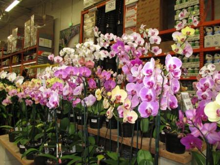 plants Home Depot 002-A