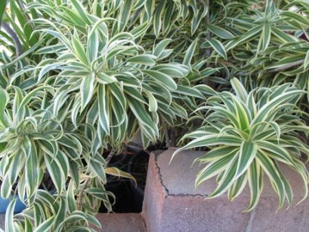 neighbor's plants 003-A