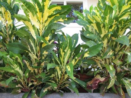 neighbor's plants 001-A