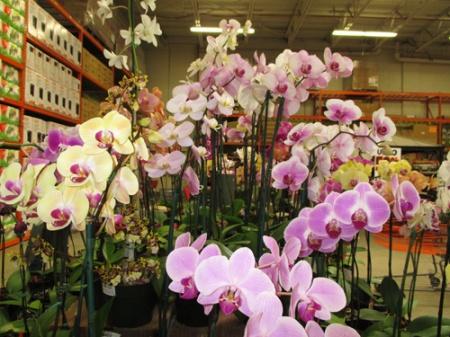plants Home Depot 003-A