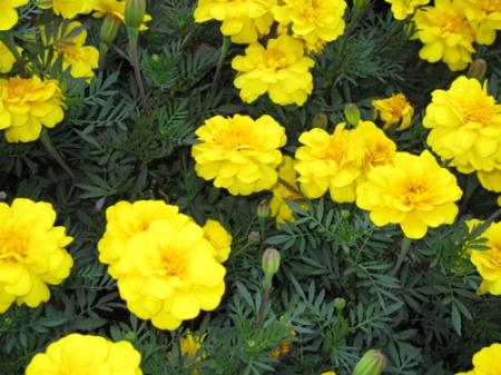 plants Home Depot 005-A