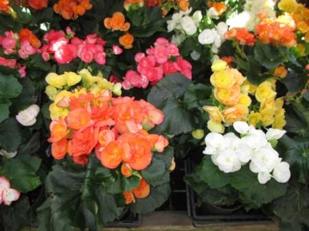 plants Home Depot 007-A