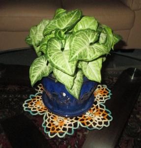 plant 001-A