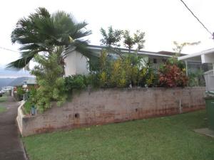 neighbor's guava tree 001-A