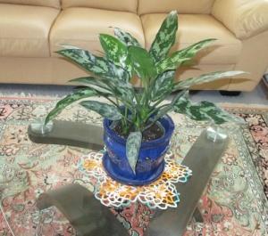 Ferns, Ryans, plant 014-A