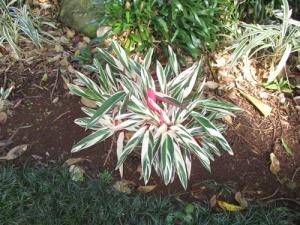 Wahiawa Botanical Garden 009-A