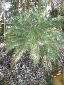 Wahiawa Botanical Garden 010-A