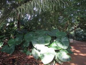Wahiawa Botanical Garden 011-A
