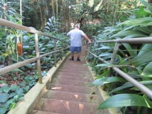 Wahiawa Botanical Garden 020-A