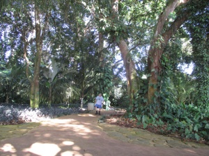 Wahiawa Botanical Garden 023-A
