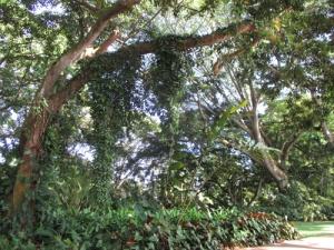 Wahiawa Botanical Garden 025-A