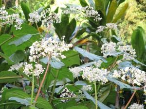 Wahiawa Botanical Garden 032-A