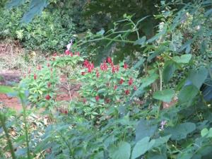 Wahiawa Botanical Garden 035-A