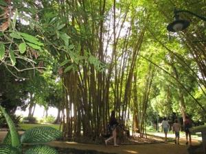 Wahiawa Botanical Garden 044-A