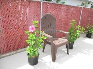 patio-plants-007-a