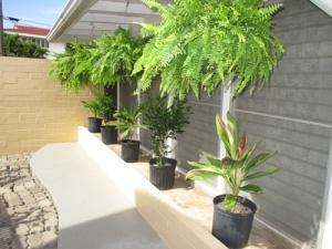 patio-plants-011-a