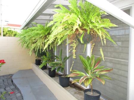 Plants 002-A