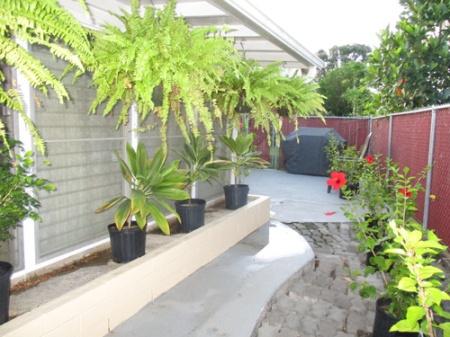 Plants 009-A