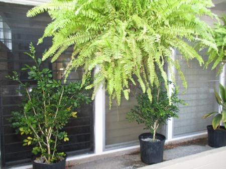 Plants 010-A