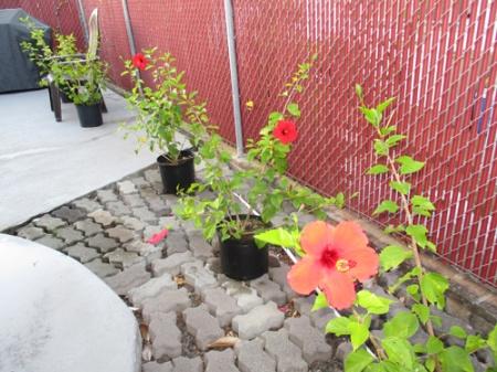 Plants 012-A