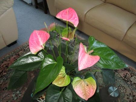 Plants 016-A